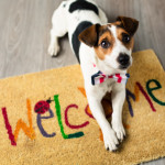 Buying and Selling a Home as a Pet Owner